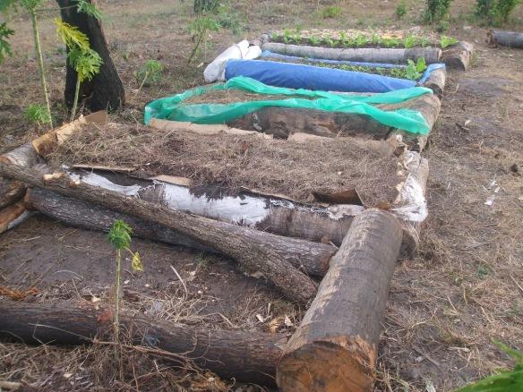 RK raised beds 2